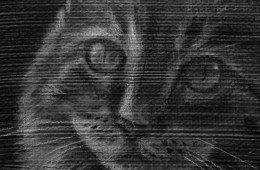 New Cat Painting Underway